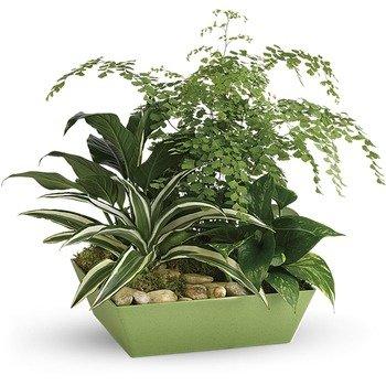 Jardín de Plantas Para Siempre Verde