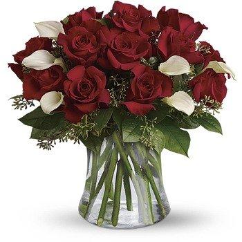 Sé Aún Mi Corazón - Docena de Rosas Rojas