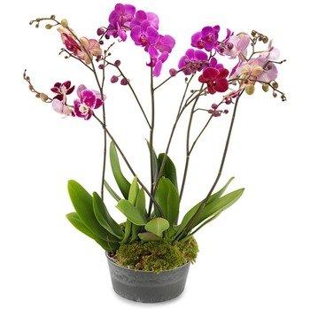 La Maravilla de las Orquídeas
