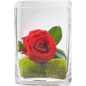 Deseo del corazón (incluido florero)