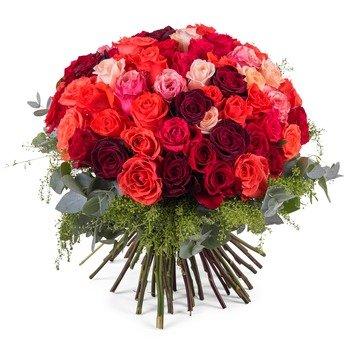 60 Rosas Multi-Colores de Tallo Corto