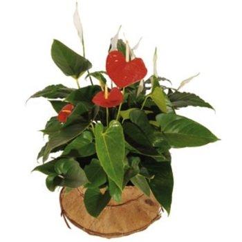Arreglo de Plantas para Amantes de la Naturaleza